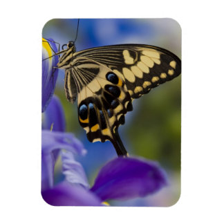Sammamish, Washington Tropical Butterfly 6 Rectangular Photo Magnet