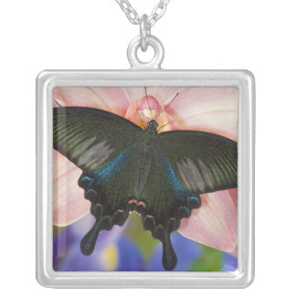 Sammamish, Washington Tropical Butterfly 6 Silver Plated Necklace