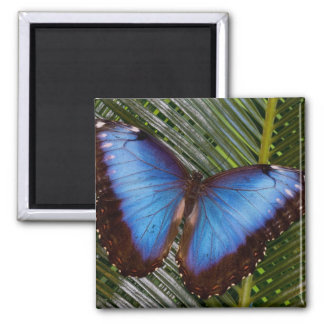 Sammamish Washington Tropical Butterfly 6 Square Magnet