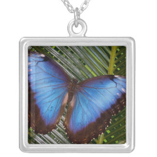 Sammamish Washington Tropical Butterfly 6 Square Pendant Necklace