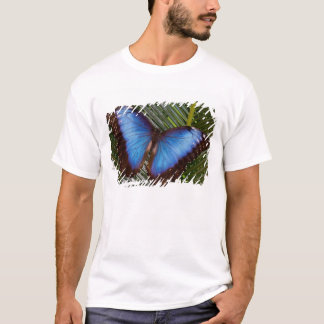 Sammamish Washington Tropical Butterfly 6 T-Shirt