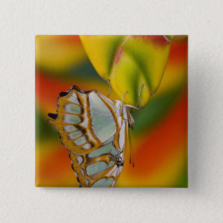 Sammamish, Washington Tropical Butterfly 7 15 Cm Square Badge