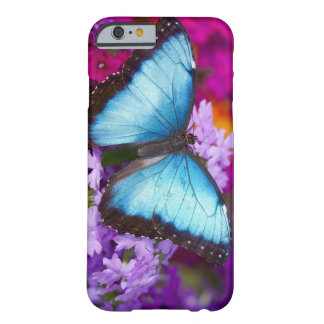 Sammamish Washington Tropical Butterfly 7 Barely There iPhone 6 Case