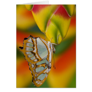 Sammamish, Washington Tropical Butterfly 7 Card