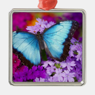 Sammamish Washington Tropical Butterfly 7 Christmas Ornament