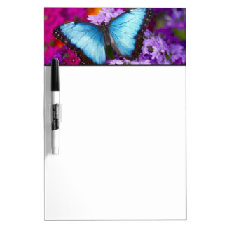 Sammamish Washington Tropical Butterfly 7 Dry Erase Board
