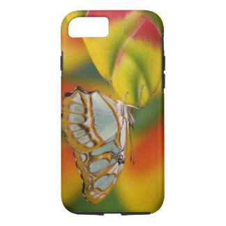 Sammamish, Washington Tropical Butterfly 7 iPhone 8/7 Case