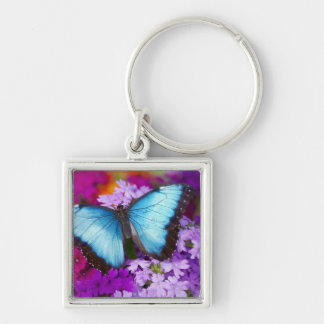 Sammamish Washington Tropical Butterfly 7 Key Ring