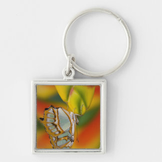 Sammamish, Washington Tropical Butterfly 7 Key Ring
