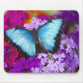 Sammamish Washington Tropical Butterfly 7 Mouse Mat