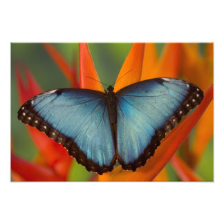 Sammamish Washington Tropical Butterfly 7 Photo Print
