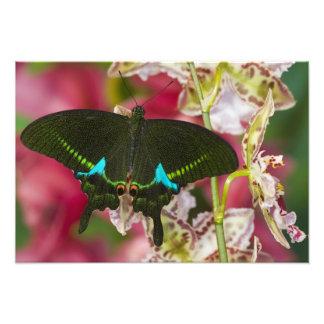 Sammamish, Washington Tropical Butterfly 7 Photo Print