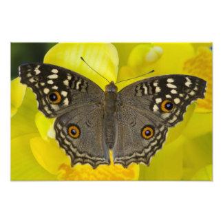 Sammamish Washington Tropical Butterfly 7 Photo Print