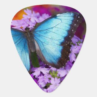Sammamish Washington Tropical Butterfly 7 Plectrum