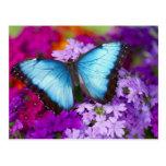 Sammamish Washington Tropical Butterfly 7 Postcard