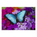 Sammamish Washington Tropical Butterfly 7 Poster