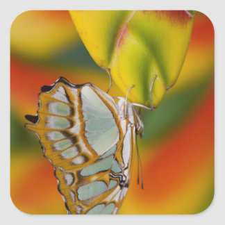 Sammamish, Washington Tropical Butterfly 7 Square Sticker