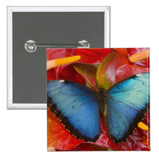Sammamish Washington Tropical Butterfly 8 15 Cm Square Badge
