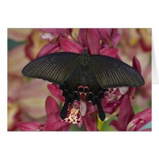 Sammamish, Washington Tropical Butterfly 8 Card