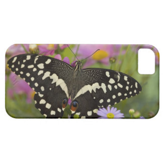 Sammamish, Washington Tropical Butterfly 8 Case For The iPhone 5