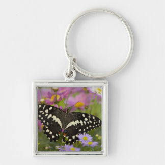Sammamish, Washington Tropical Butterfly 8 Key Ring