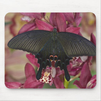 Sammamish, Washington Tropical Butterfly 8 Mouse Mat