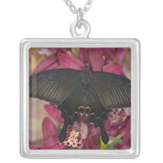 Sammamish, Washington Tropical Butterfly 8 Necklaces