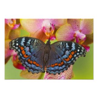 Sammamish Washington Tropical Butterfly 8 Photo Print