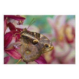Sammamish, Washington Tropical Butterfly 8 Photo Print
