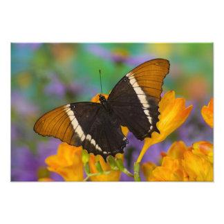 Sammamish, Washington Tropical Butterfly 8 Photographic Print