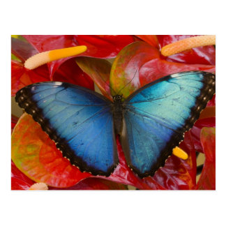 Sammamish Washington Tropical Butterfly 8 Postcard