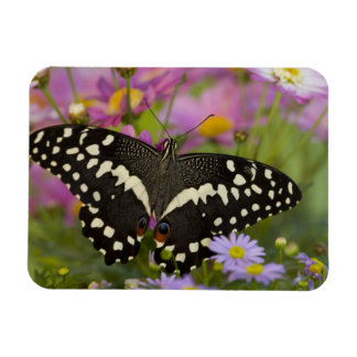 Sammamish, Washington Tropical Butterfly 8 Rectangular Photo Magnet