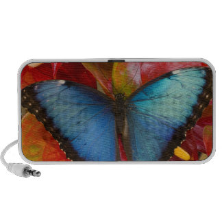 Sammamish Washington Tropical Butterfly 8 Portable Speakers