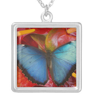 Sammamish Washington Tropical Butterfly 8 Square Pendant Necklace