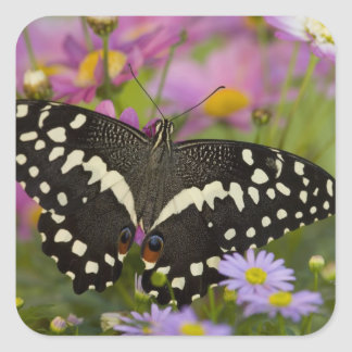 Sammamish, Washington Tropical Butterfly 8 Square Sticker