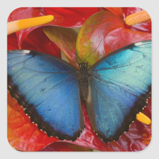Sammamish Washington Tropical Butterfly 8 Square Sticker
