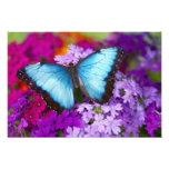 Sammamish Washington Tropical Butterfly 9 Art Photo
