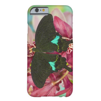 Sammamish, Washington Tropical Butterfly 9 Barely There iPhone 6 Case