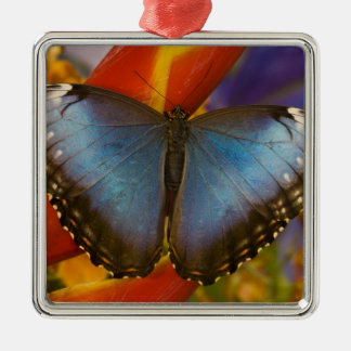 Sammamish Washington Tropical Butterfly 9 Christmas Ornament