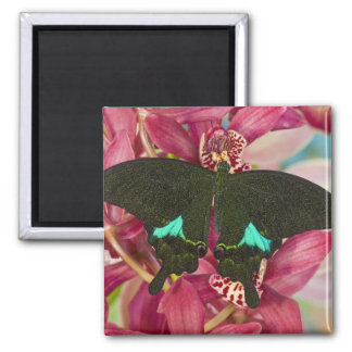 Sammamish, Washington Tropical Butterfly 9 Magnets