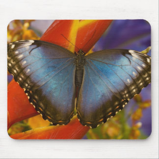 Sammamish Washington Tropical Butterfly 9 Mouse Pad