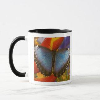 Sammamish Washington Tropical Butterfly 9 Mug