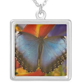 Sammamish Washington Tropical Butterfly 9 Custom Jewelry