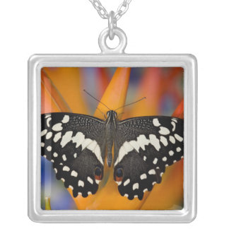 Sammamish, Washington Tropical Butterfly 9 Necklaces