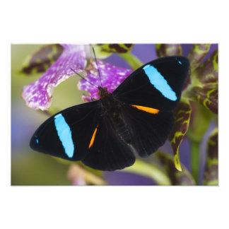 Sammamish, Washington Tropical Butterfly 9 Photo Art