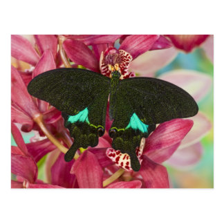 Sammamish, Washington Tropical Butterfly 9 Postcard