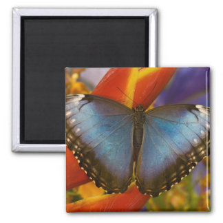 Sammamish Washington Tropical Butterfly 9 Square Magnet