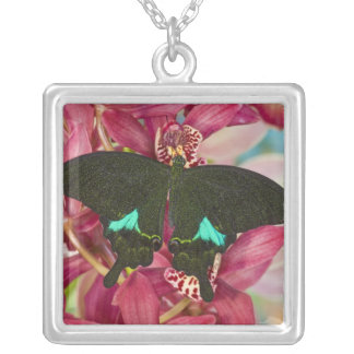 Sammamish, Washington Tropical Butterfly 9 Square Pendant Necklace