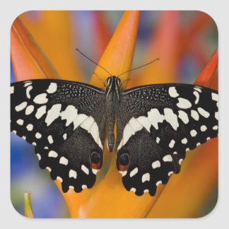 Sammamish, Washington Tropical Butterfly 9 Square Sticker