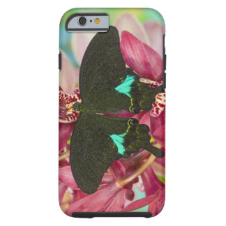 Sammamish, Washington Tropical Butterfly 9 Tough iPhone 6 Case